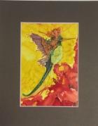 Royal Hummingbird